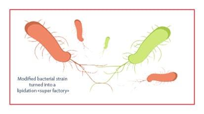 Schema coli XXL