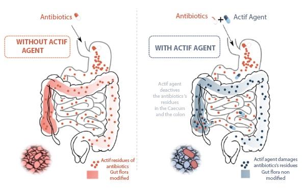 Schema Antimicrobien