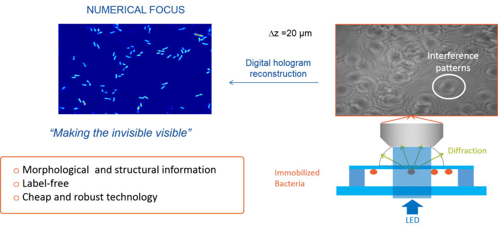 Technology: Holographic Microscopy
