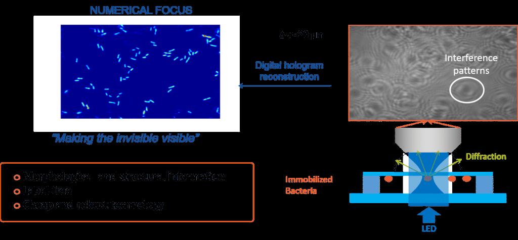 Technology: Holographic Microscopy